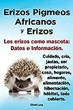 Erizos Pigmeos Africanos y Erizos. Los erizos como mascota: Datos e Información. Cuidado, cría, jaulas, ser propietario, casa, hogares, alimento, alimentación, hibernación, hábitat, todo cubierto.
