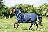 Gallop Trojan 600d cuello completo alfombra de participación 350g EU 160cm