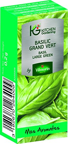 KG BY VILMORIN 8200005 Jardinières Basilic Grand Vert Vert 7 x 3 x 2 cm
