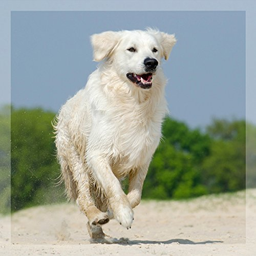 51GwMRCP01L - GreenPet Pet Liquid Desparasitación Anti Gusanos. Apto para perros, gatos y aves.