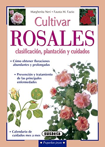 Cultivar rosales, clasificación, plantación y cuidados (Pequeñas Joyas) por Sinache