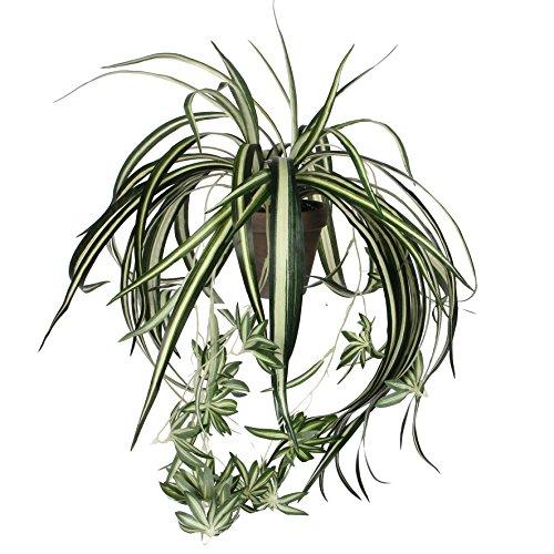 Grünpflanzen-Arrangement Trendige Grünpflanzen
