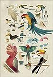 Poster 30 x 40 cm: Vögel von Dieter Braun - Hochwertiger Kunstdruck, Kunstposter