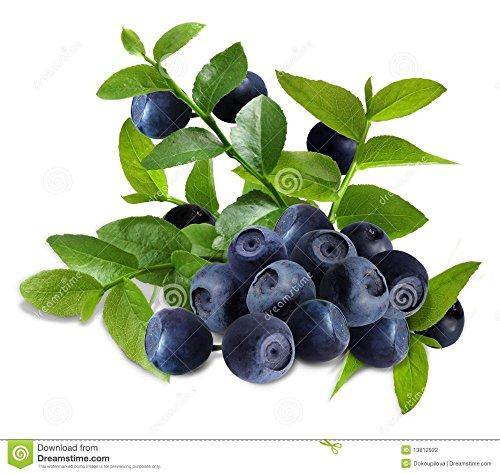 Légumes et graines de fruits de semences de bleuets en corymbe Blueberries DIY countyard Bonsai plantes Semences pour la maison et le jardin 100 graines