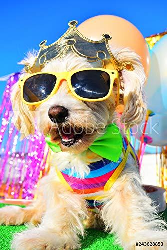 otiv: Happy Party Dog #243628853 - Bild auf Forex-Platte - 3:2-60 x 40 cm / 40 x 60 cm ()