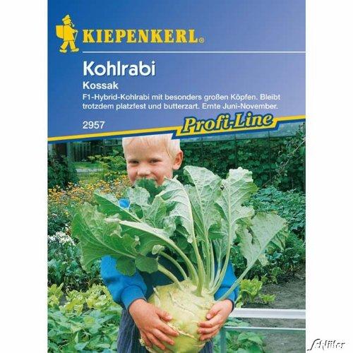 Kohlrabi (Riesen-Kohlrabi) 'Kossak'