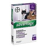 Advantage 80 mg für gr.Katzen und gr.Zierkaninchen 4X0.8 ml