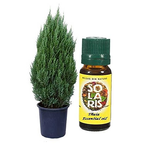 THUJA ESSENTIAL OIL - 10ml - Thuja Occidentalis Herb - Pure and Natural by SOLARIS -