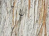Glücksvilla Holz-Details 3 - Exklusives Künstlermotiv, XXL Bild/Wandbild, Größe: 80 x 60 cm Quer-Format, Digital-Druck auf Art Canvas Leinwand, Keilrahmen 2 cm