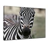 Keilrahmenbild - Zebra - Portrait - 120x90 cm 1 teilig - Bilder als Leinwanddruck - Wandbild von Bilderdepot24 - Tierwelten - Afrika - gestreiftes Wildpferd