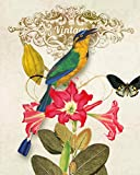 Best Prints Prints Prints Bird Houses - Gallerist.in Art Prints - The Bird with red Review