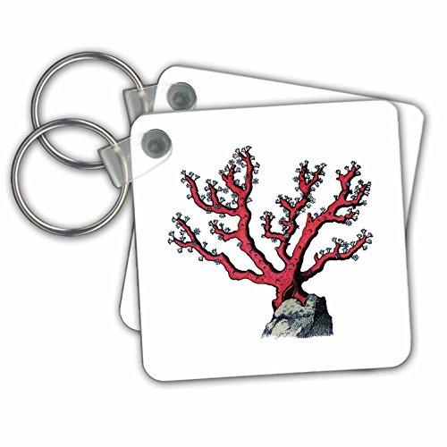 3dRose Print of Red Coral Undersea Plant - Key Chains, 2.25 by 2.25-inch, Set 2 Schlüssela Preisvergleich