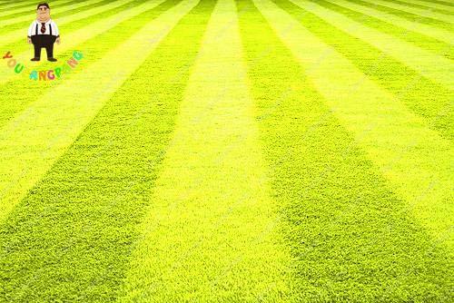 Go Garden À haute teneur RainBow gazon, Golf Maison de catégorie spéciale pelouse = terrains de football, Villa, Fleurs plantes Jardin des plantes 200 pièces: 4