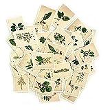 Vektenxi Premium Vintage Pflanzenart Scrapbooking Selbstklebende Papieraufkleber Milchalbum Dekoration