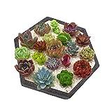 Sechseckige Form aus Zement für Blumentopf, Dekoration für Beton, Palette, Silikon, A