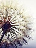 Artland Qualitätsbilder I Glasbilder Deko Glas Bilder 60 x 80 cm Botanik Blumen Pusteblume Foto Blau G5RK Große Pusteblume vor Einem Blauen Hintergrund