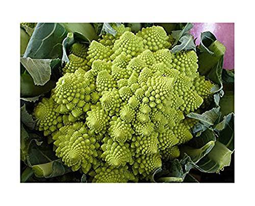Blumenkohl Romanesco - Kohl - Broccoli - Brokkoli - 100 Samen