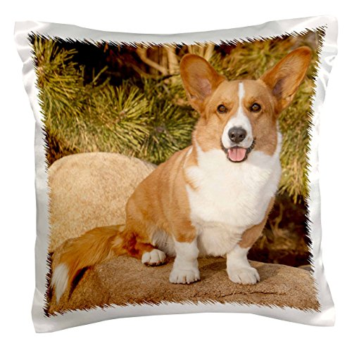 3drose PC _ 140281_ 1Wasserspeier Welsh Corgi Cardigan Hund auf Rock NA02pwo0023piperanne Worcester Kissen Fall, 40,6x 40,6cm
