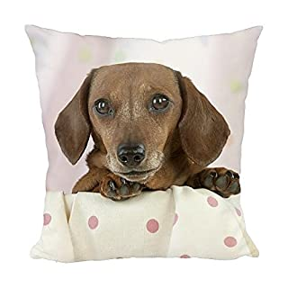 12x12 Cushion of Dog - Miniature Short Haired Dachshund - in a basket (5260693)