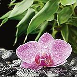 Artland Qualitätsbilder I Glasbilder Deko Glas Bilder 20 x 20 cm Botanik Blumen Orchidee Foto Pink Rosa D1IS Rosa Orchidee auf schwarzen Zen Steinen