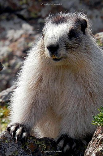 An Alaska Brower's Marmot in the Wild Journal: 150 Page Lined Notebook/Diary -