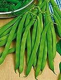 Samen Grüne Buschbohnen Zlatoglazka Organisch gewachsen russisches Gemüse