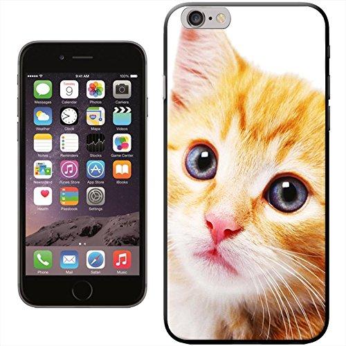 Chatons Coque arrière rigide détachable pour Apple iPhone modèles, plastique, Cute Kittens In Christmas Hat, iPhone 5C Close Up Of Cute Blue Eye Cat