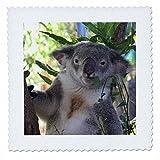 3drose QS _ 22800_ 1Cute Koala Essen Eukalyptus
