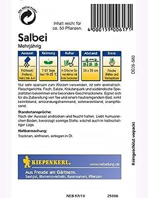 Kiepenkerl Salbei Mehrjährig von Kiepenkerl - Gemüse-Saatgut bei Du und dein Garten