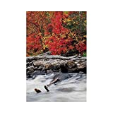 Liumiang Drapeau Eco-Friendly Manual Custom Garden Flag Demonstration Flag Game Flag,Driftwood Decor,A Raft of Driftwood Lies by a Rushing Rocky Stream Autumn Forest Digital Image,Redeco d¨¦cor