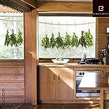 posterdepot Fenstersticker Hängende Kräuter - Trägerfolie 25 x 70 cm - 3-teilig, ergibt Motivgröße etwa 64 x 24 cm