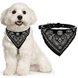 AGIA TEX Hundehalsband mit Hals-Tuch verstellbar Bandana für Hund Katze Farbe Schwarz Größe L = 55 cm lang