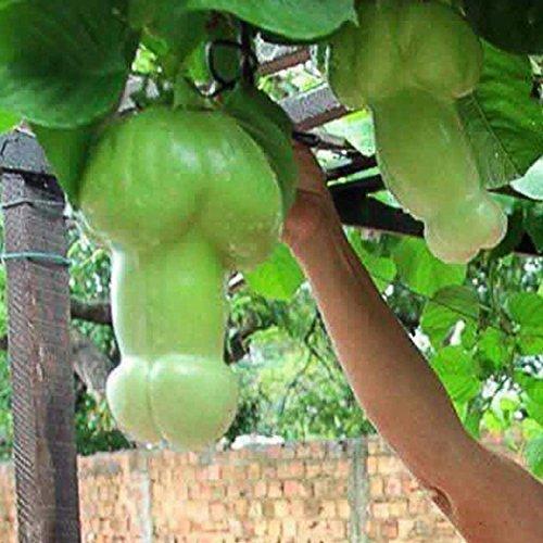Meihet 30 Teile/Beutel Kürbiskerne Seltene Melone Organische Gemüsesamen Hausgarten Samen