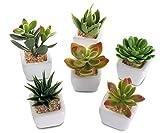 6er Set Sukkulenten B x H 4,5x9cm Kunstpflanze Grün Weiß Kunstblume Deko