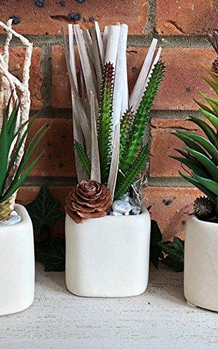 Homes on Trend Plantas de Cactus suculentas Artificiales en Maceta Jardin Decorativo...