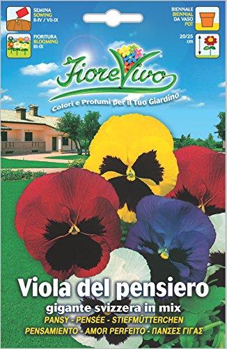 Hortus 60SDFV024 Fiorevivo Viola Pensiero Gigante Svizzera, Mix, 13x0.2x20 cm