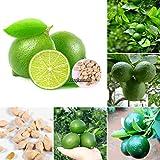 Portal Cool Pack / 20 Stücke: 20 Stücke Mini Bonsai Baum Balkon Topf Grüne Obstbäume Limetten Samen Ehe8