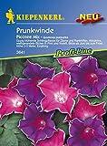 Kiepenkerl, Prunkwinde, Ipomoea purpurea Picotee Mix