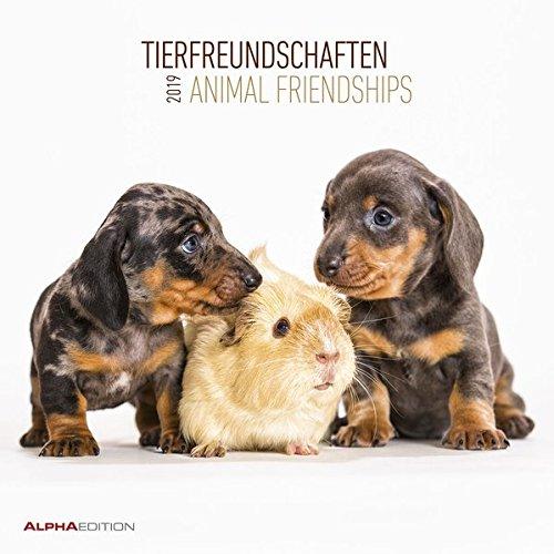 Tierfreundschaften 2019 - Broschürenkalender
