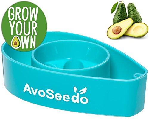 Produktbild AvoSeedo das besondere Garten Geschenke - Pflanzen Sie Ihren eigenen Avocadobaum. Kleine Geschenke für Männer und Frauen. Die neue klein Dekoration - Blau