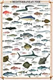empireposter - Educational - Mediterranean Fish - Größe (cm), ca. 61x91,5 - Poster, NEU - Text in...