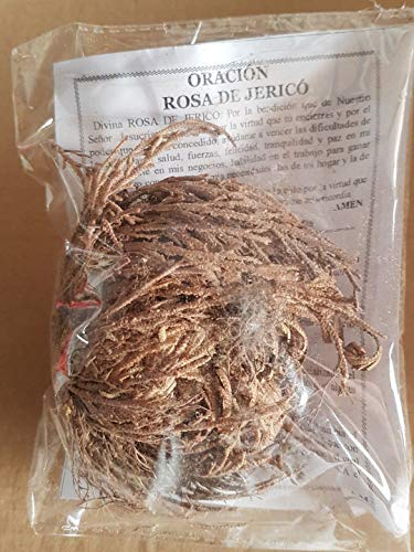 Portal Cool De Rosa Jerico 7,8 Cm Doradilla Planta de Resurreccion Jericho Anastatica