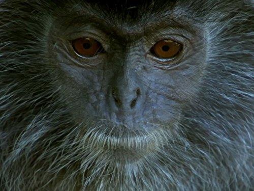 planet-der-primaten