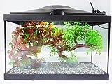 Klein Starter Aquarium, komplettes Aquarium, Das mit-LED-Beleuchtung und Filter