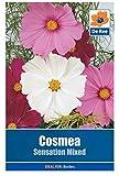Portal Cool 2 Packungen Cosmea Sensation Mixed Blumensamen