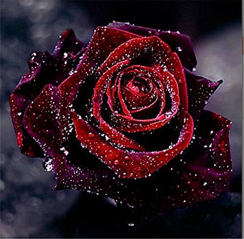 5D Diamant Kit DIY Kristall Diamant Strass Gemälde eingefügt Malen nach Zahlen Kits Kreuzstich Stickerei Bildern der Kristalle Stickdecken arts- (K016 Rose flower)