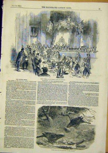 Stampa 1849 degli Uccelli di Bower del Palazzo di Banchetto