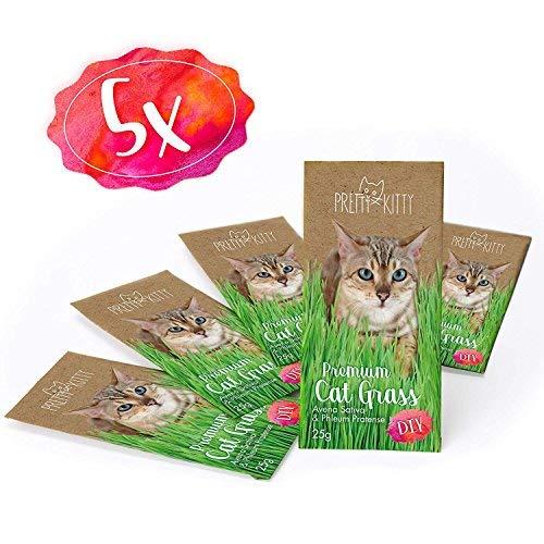 ium Katzengras Samen - 5 Beutel mit 25 g ()