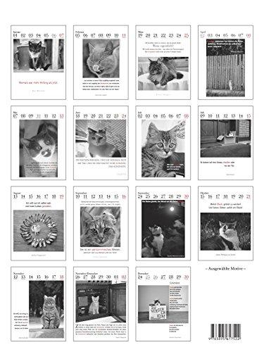 Der literarische Katzenkalender 2018: Zweifarbiger Wochenkalender - 2