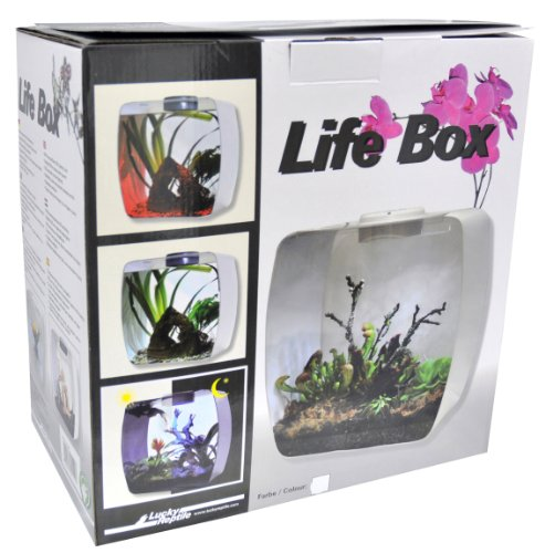 Lucky Reptile LB-35W Life Box 35 Nanoterrarium aus Acrylglas, weiß